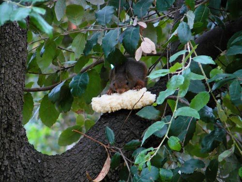 red-squirrel-with-bread