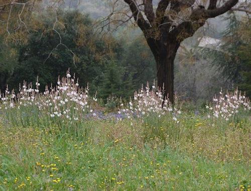 flowers on montjuic