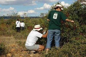 Voluntariado en Cabañeros ©WWFCanon / C.Vallecillo